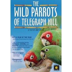 WildParrots.jpg