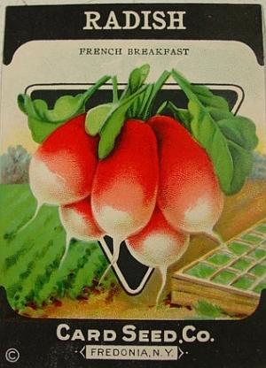radishseed