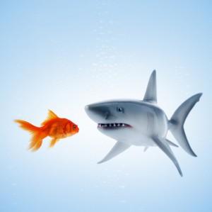 SharkGoldfishCropped2