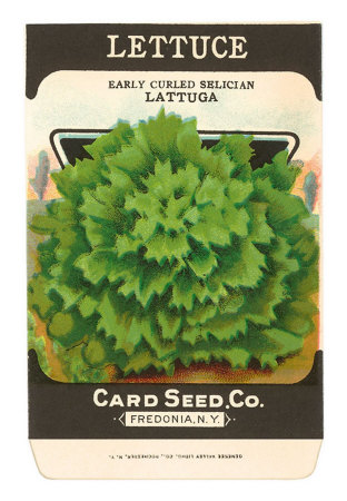 lettuceseed